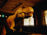 Tyrannosauraus Rex at Natural History Museum, London, Greater London, England Photographic Print by Glenn Beanland