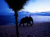 Mahout with Elephant, Jomtien, Chonburi, Thailand Photographic Print by Stu Smucker