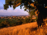 Firestone Vineyard in Background, Santa Ynez Valley, California Photographic Print by Oliver Strewe