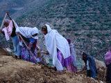 Women Repairing Road on Hillside, Eritrea Fotografisk tryk af Oliver Strewe