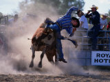 Rodeo Rider Falling Off Bull, New South Wales, Australia Photographic Print by Oliver Strewe