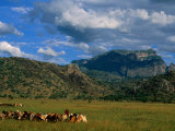 Karamojong Pastoral Land on Plains Below Mount Kadam, Uganda Photographic Print by Ariadne Van Zandbergen