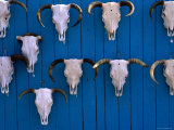 Animal Skulls on Wall, New Mexico Photographic Print by Peter Hendrie