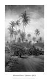 Coconut Grove, Lahaina, 1910 Poster von Ray Jerome Baker