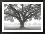 Silhouette d'un chêne Affiches par William Guion