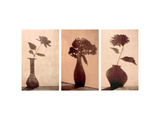Floral Silhouettes Triptych Posters
