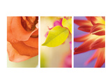 Exotic Floral Triptych Prints