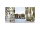 Winter Forest Triptych Photo