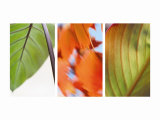 Leaves' Journey Triptych Photo