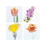 Pastel Stems Four Patch Poster