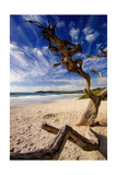 Tree on Carmel Beach, California Photographic Print by George Oze