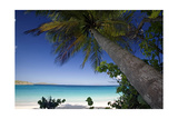 Trunk Bay Palm Tree, St John, US Virgin Islands Photographic Print by George Oze