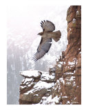 Soaring High Photographic Print by Bill Stephens
