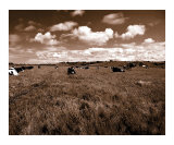 Cow Field 1 Photographic Print by gypsy dog imagery