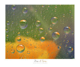 Drops of Spring Photographic Print by Neil Bramley