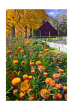 Autumn Flowers Photographic Print by George Oze