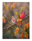 The Cardinals Giclee Print by Sarah Davis