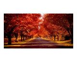 Autumns Warmth Fotodruck von Dion Van Huyssteen