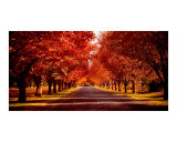 Autumns Warmth Photographic Print by Dion Van Huyssteen