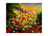 Red Poppies 5607 Giclee Print by Ledent