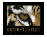 Determination - Eye of the Tiger Photographic Print by Neil Bramley