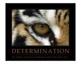 Determinazione, L'occhio della tigre, in inglese Stampa fotografica di Neil Bramley