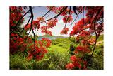 Tamarind Bay View, Culebra Island, Puerto Rico Impressão fotográfica por George Oze