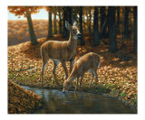 Autumn Innocence 1 Giclee Print by Crista Forest