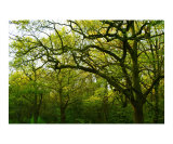 A View of Epping Forest 5 Photographic Print by Craig Mccarthy