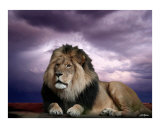 The King Photographic Print by Bill Stephens