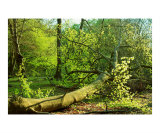 A View of Epping Forest 8 Photographic Print by Craig Mccarthy