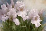 White Iris Elegance I Prints by Igor Levashov