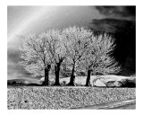 Four Sisters Photographic Print by Anne Gregory
