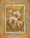 Illuminated Orchid II Prints by Elaine Vollherbst-Lane
