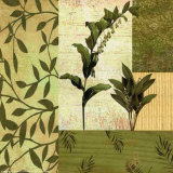 Botanical Leaves II Affiches par Marilu Windvand