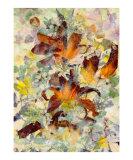 Orange Splendor Giclee Print by Shelley Xie