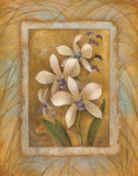 Illuminated Orchid I Posters by Elaine Vollherbst-Lane