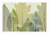 Six feuilles Posters par Steven N. Meyers