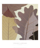 Four Leaves I Prints by Steven N. Meyers