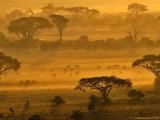 Herbivores at Sunrise, Amboseli Wildlife Reserve, Kenya Photographic Print by Vadim Ghirda