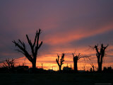 Storm Damaged Trees Silhouetted against the Setting Sun, Greensburg, Kansas, c.2007 Photographic Print by Charlie Riedel