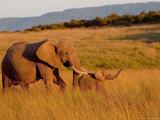 Elephant and Offspring, Masai Mara Wildlife Reserve, Kenya Fotografie-Druck von Vadim Ghirda