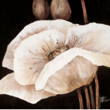 Amazing Poppies I Prints by Jettie Roseboom