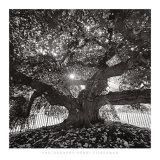 Under Camperdown Elm, Prospect Park Kunstdrucke von Henri Silberman