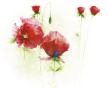 Red Poppies I Art by Andrea Fontana