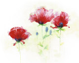 Red Poppies II Prints by Andrea Fontana