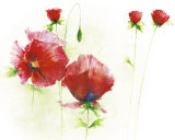 Red Poppies I Prints by Andrea Fontana