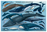 Whales & Dolphins, Giclee Print