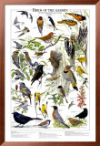 Birds of the Garden Summer Poster
