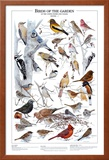 Birds of the Garden Winter I Prints